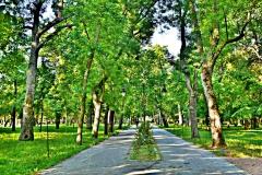 Gradski park Kanjiža